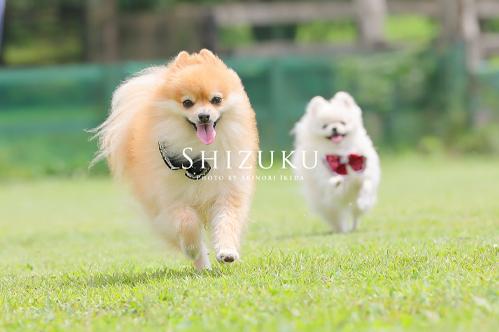 公園での犬