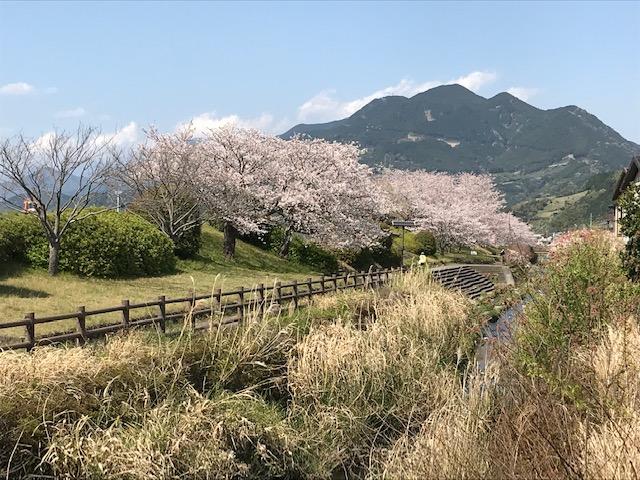 桜フォトイベント